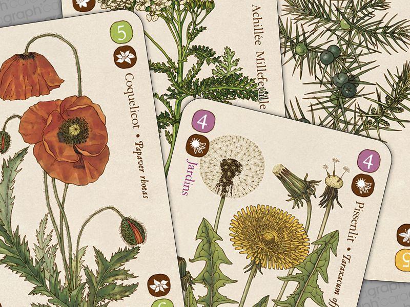 Planches botaniques pour le comptoir d 39 herboristerie - Le comptoir d herboristerie ...